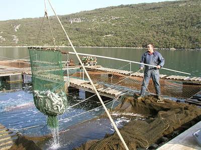 ribarstvo